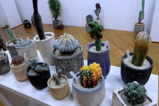 サボテンの盆栽アート「叢 Qusamura展」: 柳原美紗子のアンテーヌ・アイ